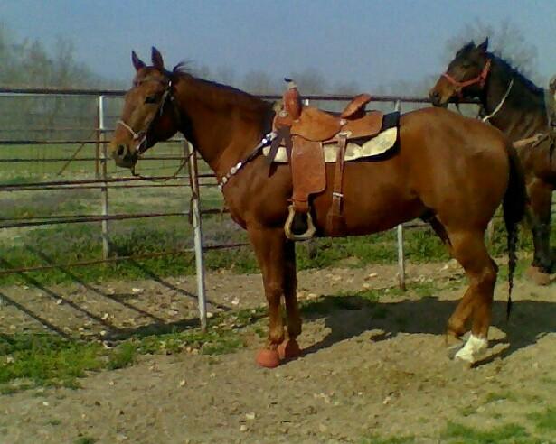Horse Home Remedy Thread (abcess